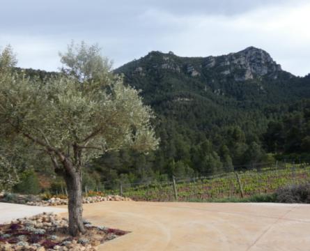 Weinbaugebiet Monsant
