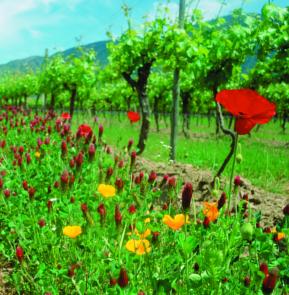 Artenvielfalt im Biowein Berg in Chile