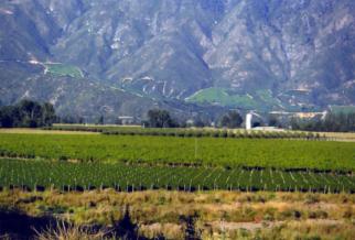 Carmenere Weingärten der Emiliana